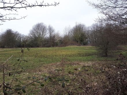 Meadow<span>33826</span>m² for rent