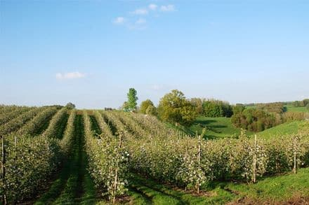Land<span>1525</span>m² for rent