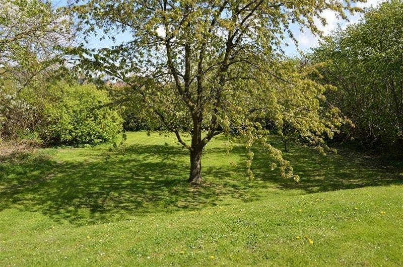 Land for sale in Enines