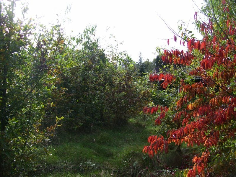 Land for sale in Herselt
