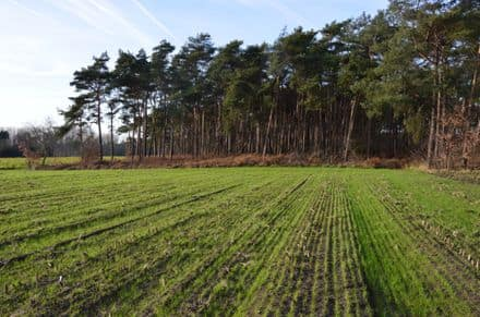 Land for rent Wachtebeke